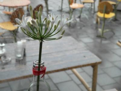 Rainy flower - Amsterdam, NL
