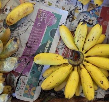 Bananas - Cairns, Queensland